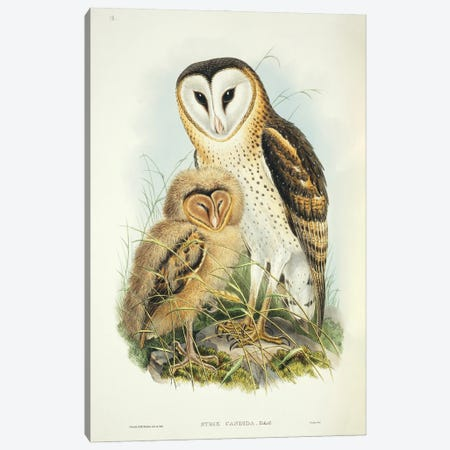 Owl. Tyto Capensis I Canvas Print #NHM459} by Natural History Museum (UK) Canvas Art