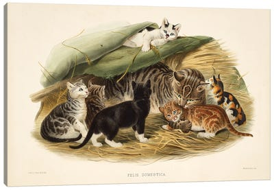 A Monograph Of The Felidae, Or Family Of The Cats By Daniel Giraund I Canvas Art Print