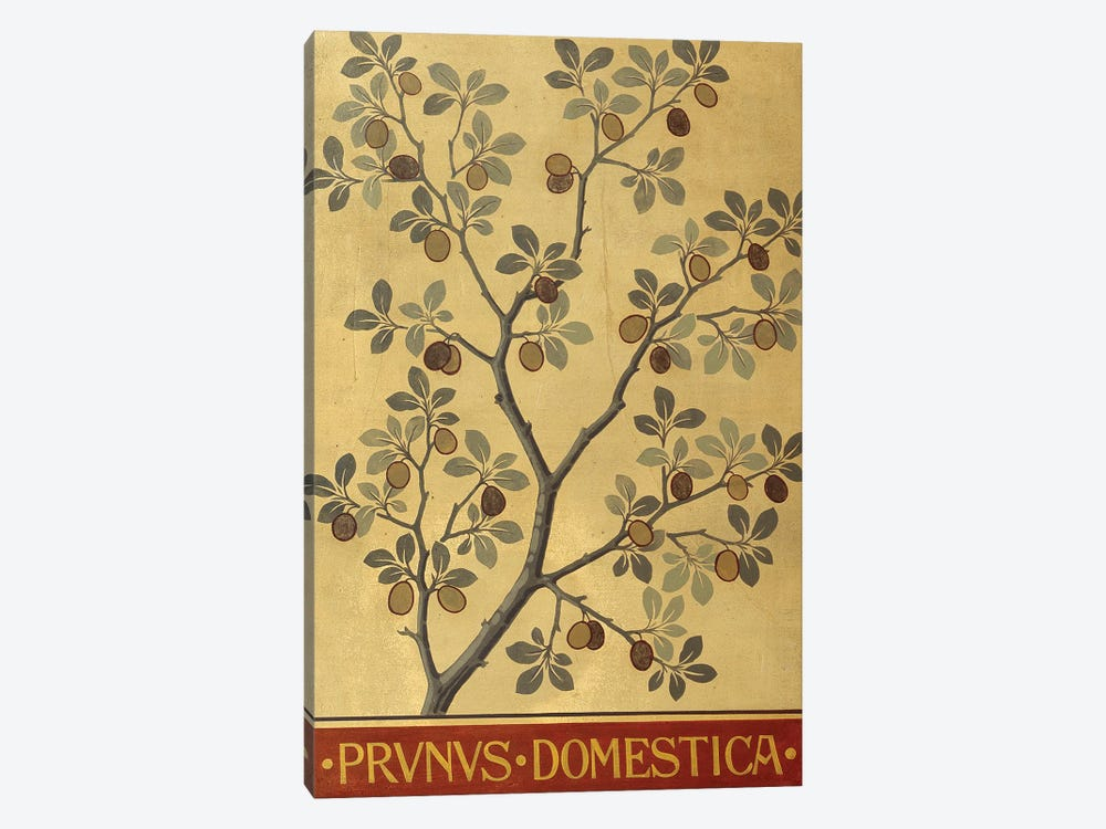 Prunus Domestica by Natural History Museum (UK) 1-piece Canvas Art Print