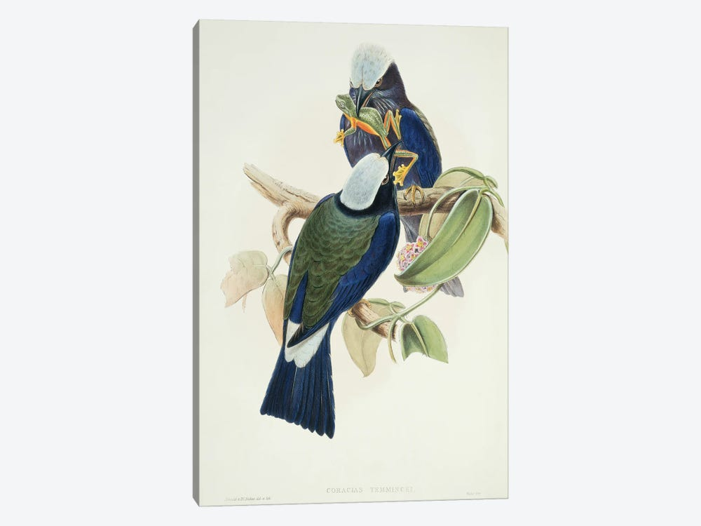 Purple-Winged Roller by Natural History Museum (UK) 1-piece Canvas Print