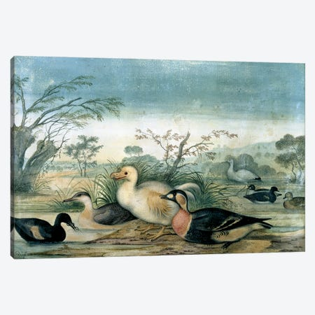 Reunion White Dodo_Painting By Pieter Withoos (1654-1693) Canvas Print #NHM574} by Natural History Museum (UK) Canvas Artwork