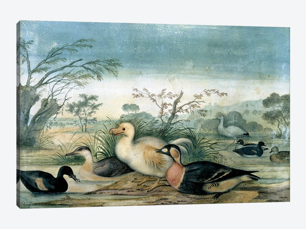 Reunion White Dodo_Painting By Pieter Withoos (1654-1693) by Natural History Museum (UK) 1-piece Canvas Art Print