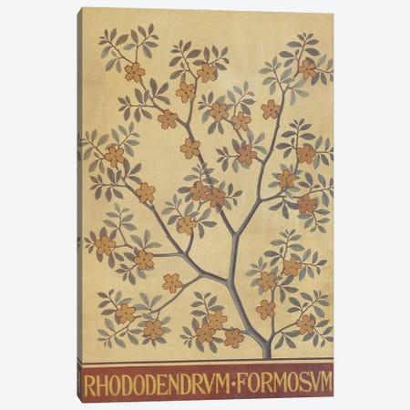 Rhododendrum Formosum Canvas Print #NHM577} by Natural History Museum (UK) Canvas Art