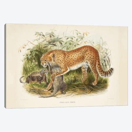 A Monograph Of The Felidae, Or Family Of The Cats By Daniel Giraund II Canvas Print #NHM5} by Natural History Museum (UK) Canvas Art