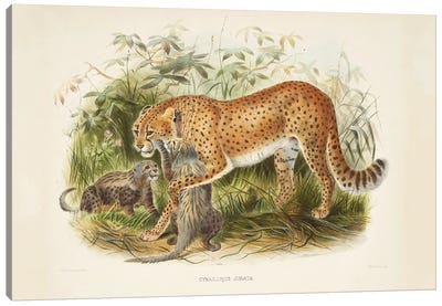 A Monograph Of The Felidae, Or Family Of The Cats By Daniel Giraund II Canvas Art Print