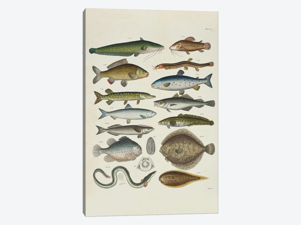 Soft-Finned by Natural History Museum (UK) 1-piece Art Print