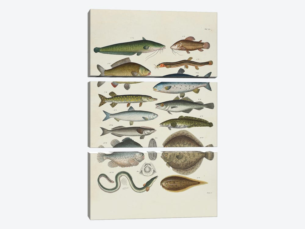 Soft-Finned by Natural History Museum (UK) 3-piece Canvas Print