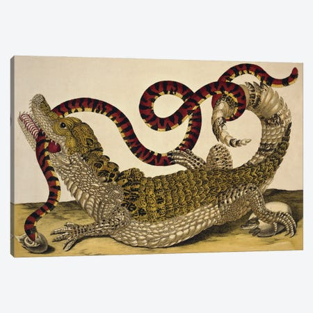 Spectacled Caiman (Caiman Crocodilus) And A False Coral Snake (Anilius Scytale) By Maria Sibylla Merian Canvas Print #NHM623} by Natural History Museum (UK) Canvas Print