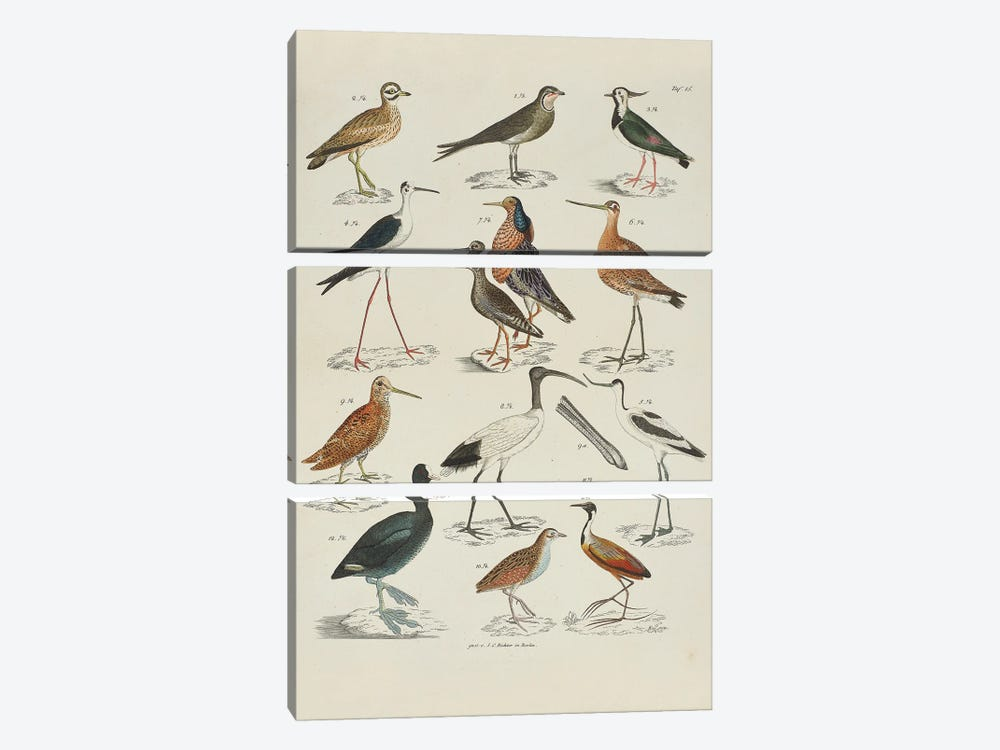 Storks; Snipes by Natural History Museum (UK) 3-piece Canvas Art Print