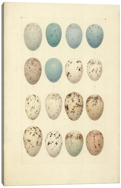 Antique Bird Eggs II - From 'Catalogue Of The Collection Of Birds' Eggs In The British Museum'. By Henrik Gronvold Canvas Art Print