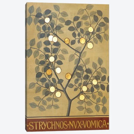 Strychnos Nux Vomica Canvas Print #NHM631} by Natural History Museum (UK) Canvas Art