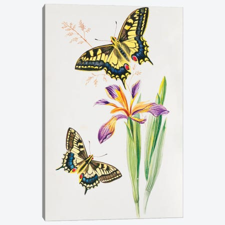 Swallowtail Canvas Print #NHM635} by Natural History Museum (UK) Canvas Print