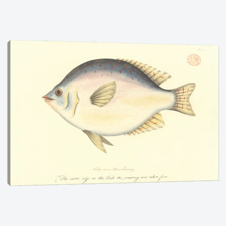 Sweep, Watercolour 378 By The Port Jackson Painter, Entitled Mannadaang, From The Watling Collection Canvas Print #NHM637} by Natural History Museum (UK) Canvas Print