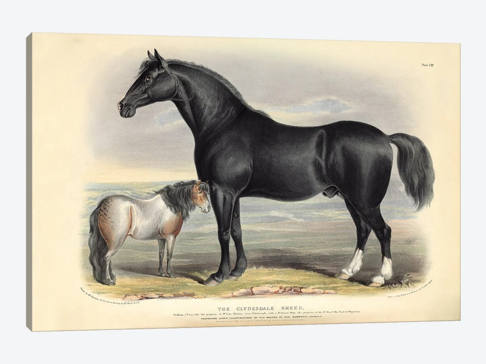 The Clydesdale Breed, Plate VIII - - Brown, Green, & Longman's; Paternoster Row, London: June, 1842 by Natural History Museum (UK) 1-piece Canvas Print