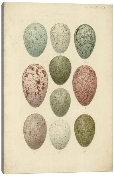 Antique Bird Eggs IV - From 'Catalogue Of The Collection Of Birds' Eggs In The British Museum'. By Henrik Gronvold Canvas Art Print