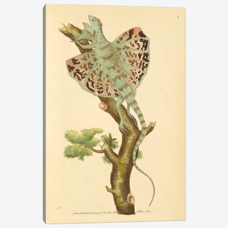 The Flying Dragon Canvas Print #NHM650} by Natural History Museum (UK) Canvas Artwork