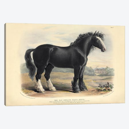 The Old English Black Horse, Plate V - Brown, Green, & Longman's; Paternoster Row, London: June, 1842 Canvas Print #NHM654} by Natural History Museum (UK) Art Print