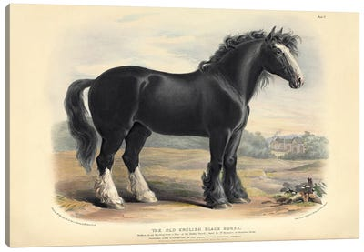 The Old English Black Horse, Plate V - Brown, Green, & Longman's; Paternoster Row, London: June, 1842 Canvas Art Print