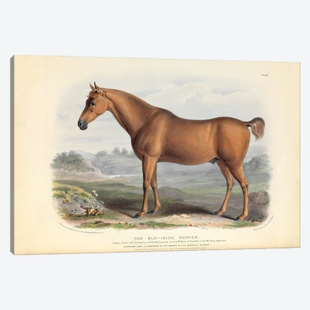 The Old Irish Hunter - Brown, Green, & Longman's; Paternoster Row, London: June, 1842 Canvas Print #NHM655} by Natural History Museum (UK) Canvas Print