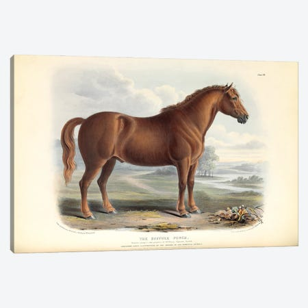 The Suffolk Punch Plate Vii - Brown, Green, & Longman's; Paternoster Row, London: June, 1842 Canvas Print #NHM659} by Natural History Museum (UK) Canvas Wall Art