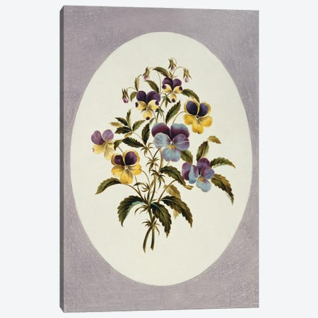 Viola Tricolor, Heartsease, Folio 62 From A Collection Of Flowers (1795) By John Edwards Canvas Print #NHM694} by Natural History Museum (UK) Art Print