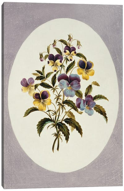 Viola Tricolor, Heartsease, Folio 62 From A Collection Of Flowers (1795) By John Edwards Canvas Art Print