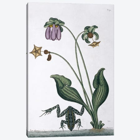Water Frog Canvas Print #NHM699} by Natural History Museum (UK) Canvas Wall Art