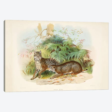 A Monograph Of The Felidae, Or Family Of The Cats By Daniel Giraund III Canvas Print #NHM6} by Natural History Museum (UK) Canvas Artwork