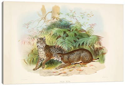 A Monograph Of The Felidae, Or Family Of The Cats By Daniel Giraund III Canvas Art Print