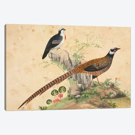 Luzon Bleeding-Heart And Another Pheasant, Large Series Plate 53, From The John Reeves Collection Of Zoological Drawings Canvas Print #NHM716} by Natural History Museum (UK) Canvas Wall Art