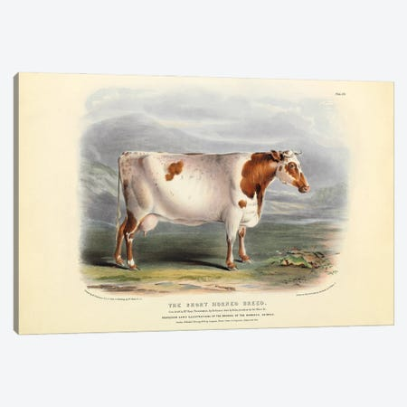 Plate 20 From The Breeds Of The Domestic Animals Of The British Islands Vol. 1, 1842 The Short Horned Breed Canvas Print #NHM732} by Natural History Museum (UK) Canvas Print