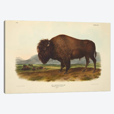 Audubons Mammals Vol II American Bison Or Buffalo Canvas Print #NHM75} by Natural History Museum (UK) Canvas Artwork