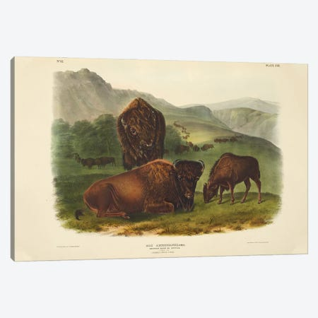 Audubons Mammals Vol II American Bison Or Buffalo Canvas Print #NHM76} by Natural History Museum (UK) Canvas Art
