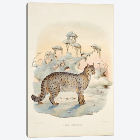 A Monograph Of The Felidae, Or Family Of The Cats By Daniel Giraund IX Canvas Print #NHM7} by Natural History Museum (UK) Canvas Art