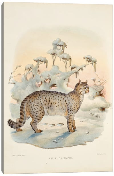 A Monograph Of The Felidae, Or Family Of The Cats By Daniel Giraund IX Canvas Art Print