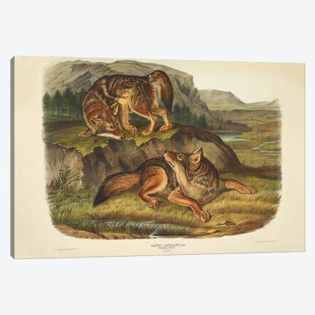 Audubons Mammals Vol II Prairie Wolf Canvas Print #NHM80} by Natural History Museum (UK) Canvas Art