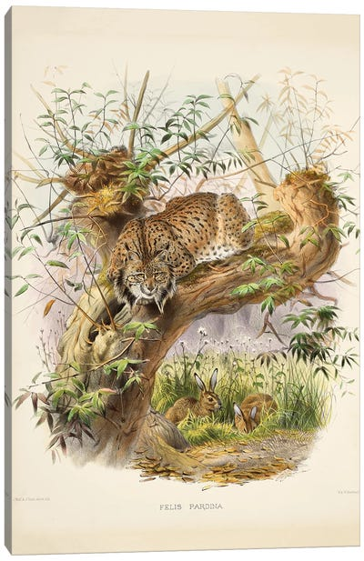 A Monograph Of The Felidae, Or Family Of The Cats By Daniel Giraund V Canvas Art Print