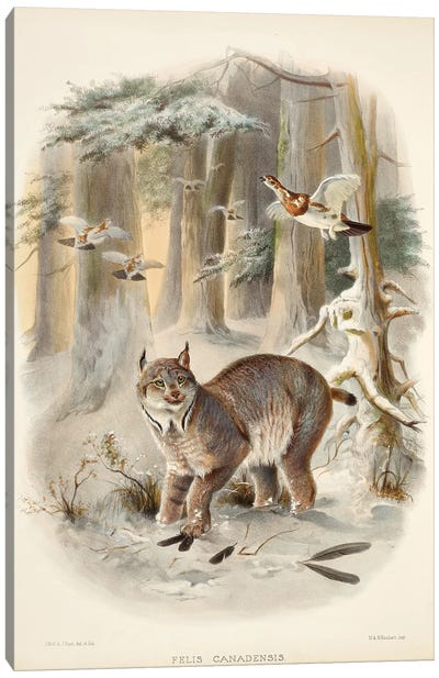 A Monograph Of The Felidae, Or Family Of The Cats By Daniel Giraund VI Canvas Art Print