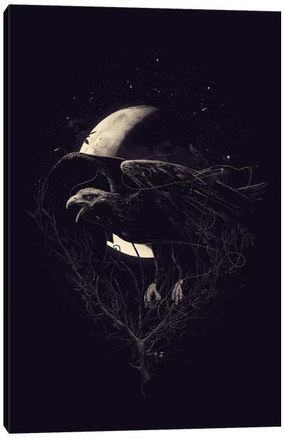 Night Flight Canvas Print #NID142