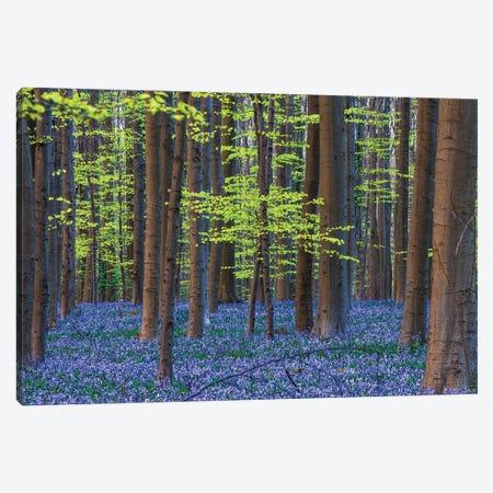 Hallerbos Blue, Belgium Canvas Print #NIL117} by Jim Nilsen Art Print