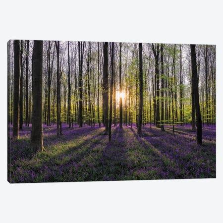 Hallerbos Sunset, Belgium Canvas Print #NIL118} by Jim Nilsen Canvas Wall Art