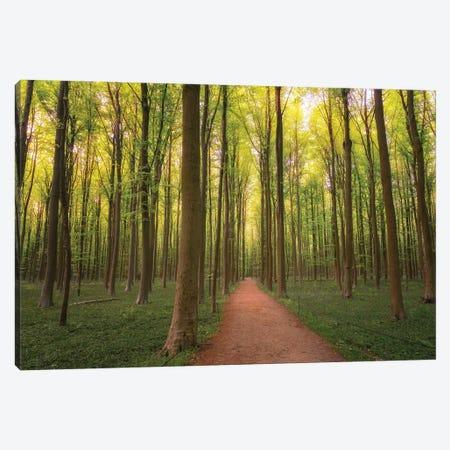 Into The Wood, Hallberbos, Belgium Canvas Print #NIL120} by Jim Nilsen Art Print
