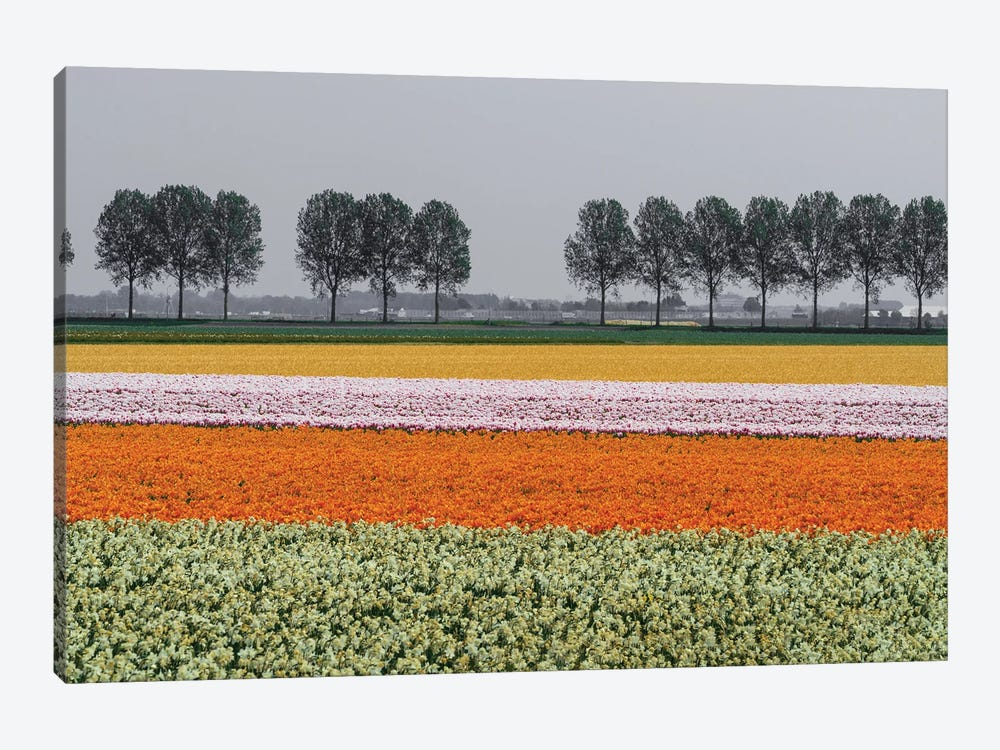 Lined Up, The Netherlands by Jim Nilsen 1-piece Canvas Wall Art