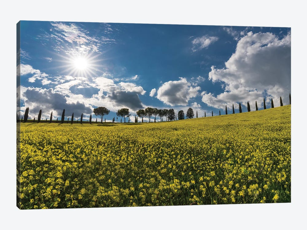 The Yellow Field, Tuscany, Italy by Jim Nilsen 1-piece Canvas Art