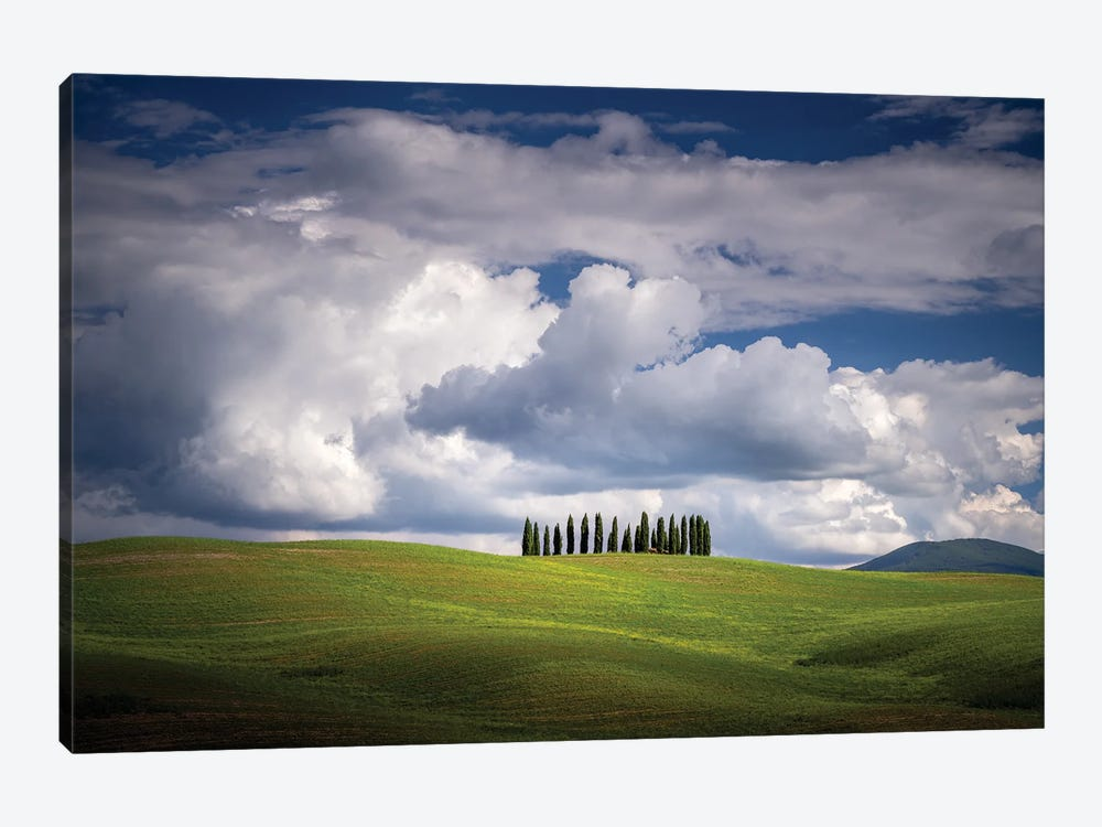 The Cypresses, Tuscany, Italy by Jim Nilsen 1-piece Art Print