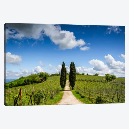 Cypress & Vine, Chianti, Italy Canvas Print #NIL16} by Jim Nilsen Canvas Artwork