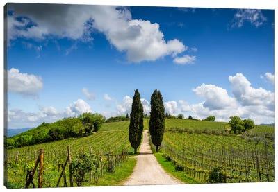 Cypress & Vine, Chianti, Italy Canvas Art Print