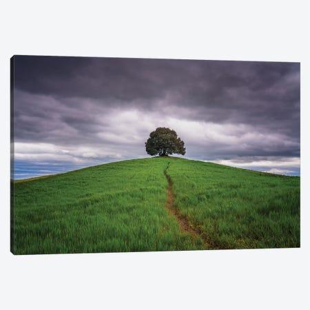 The Path, Tuscany, Italy Canvas Print #NIL178} by Jim Nilsen Canvas Art