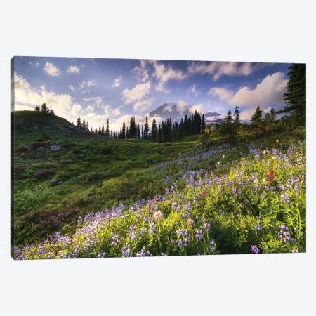 Rainier Bloom, Mt. Rainier National Park Canvas Print #NIL199} by Jim Nilsen Canvas Art