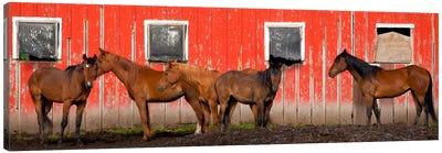 A Meeting At The Red Barn, Palouse, Washington Canvas Art Print